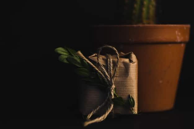 5 plantas para presentear