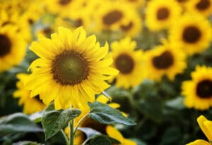8 plantas para colorir o seu jardim neste Verão