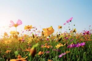 Dicas para cuidar das suas plantas no outono